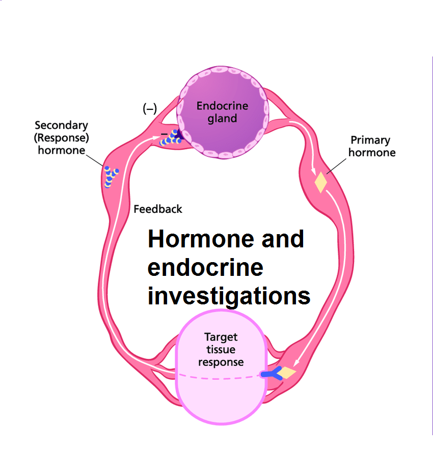 hormone-and-endocrine-investigations